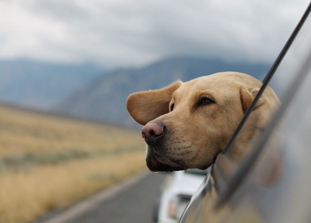 mascota de viaje
